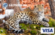 Леопардесса Бэри — Дебетовая карта / Visa Classic